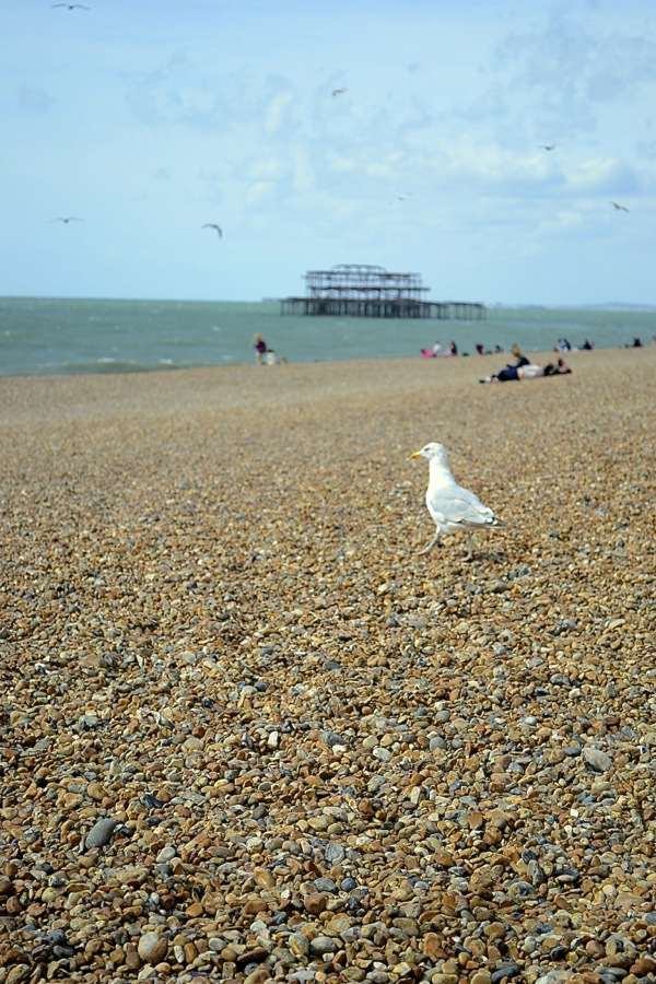 seagull_brighton