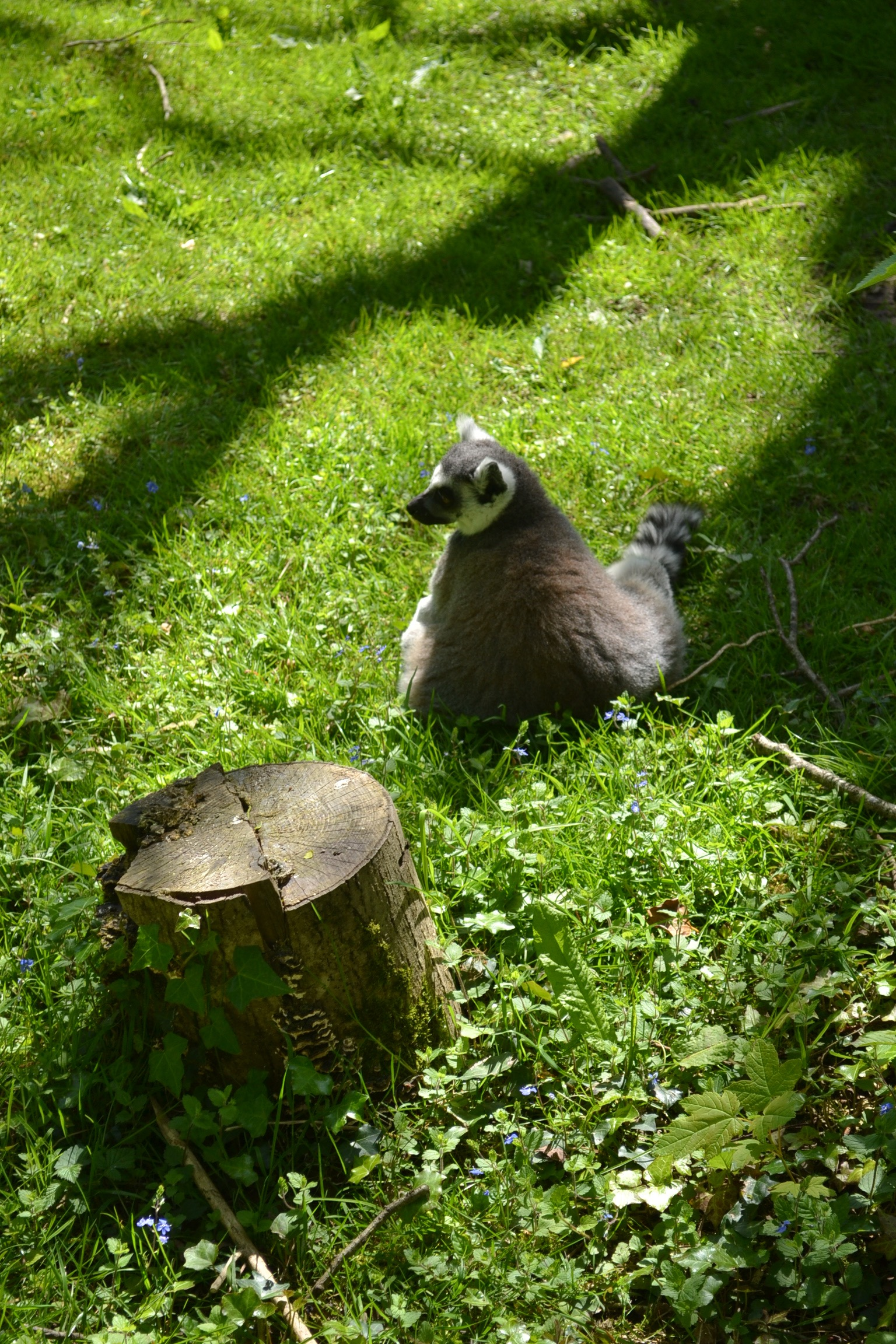 fota island cork, fota animal cork, cork city zoo, zoo near cork, fota island resort, fota cork zoo