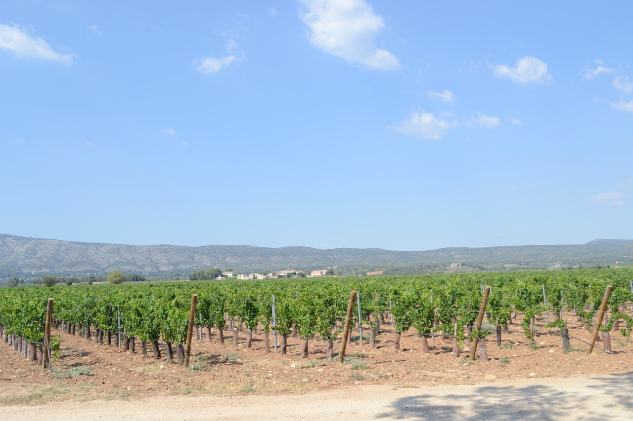 bauqiuere vines road landscape provence wine tour