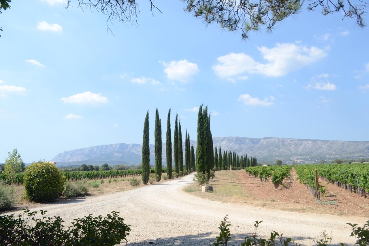 bauquiere vineyard terroir shot landscape sainte victoire provence wine tour