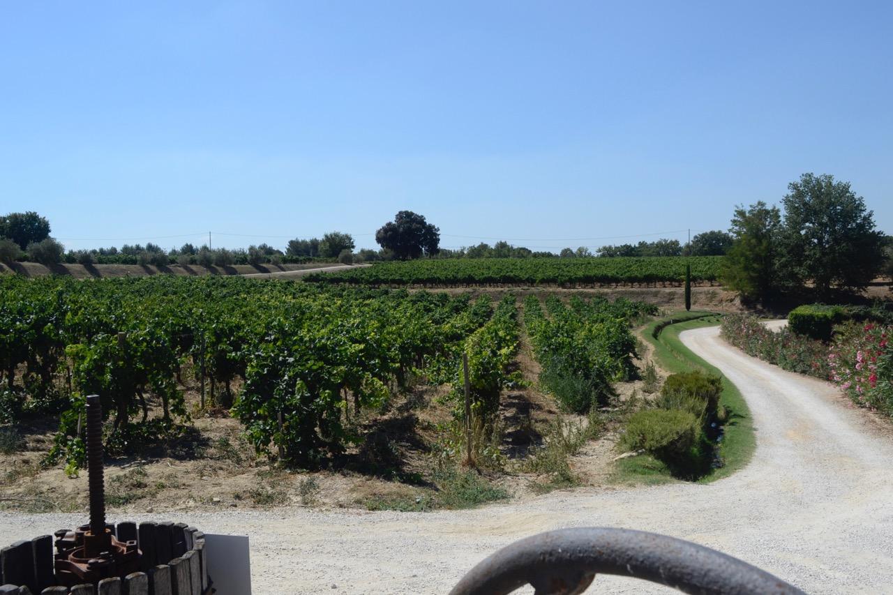 chateau dorgonne exterior vines wine tour provence