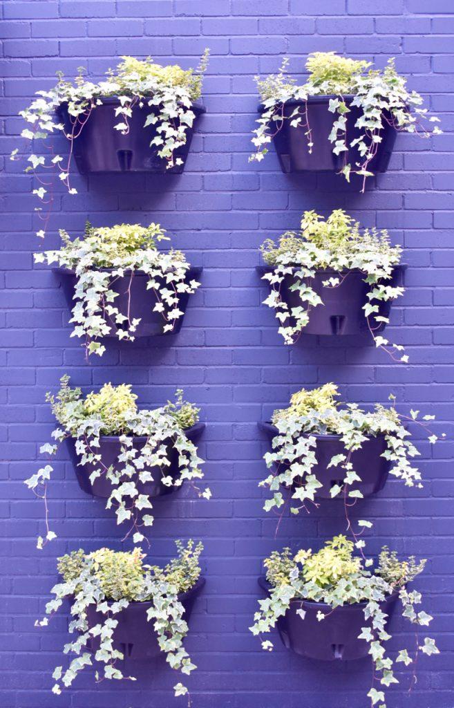 courtyard blooms gastrogays bullitt belfast