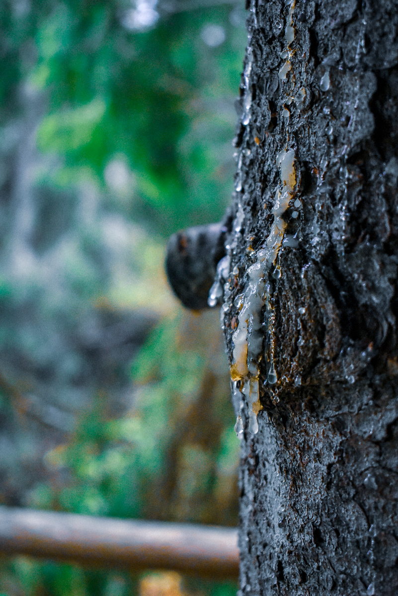 naturbyn sweden varmland